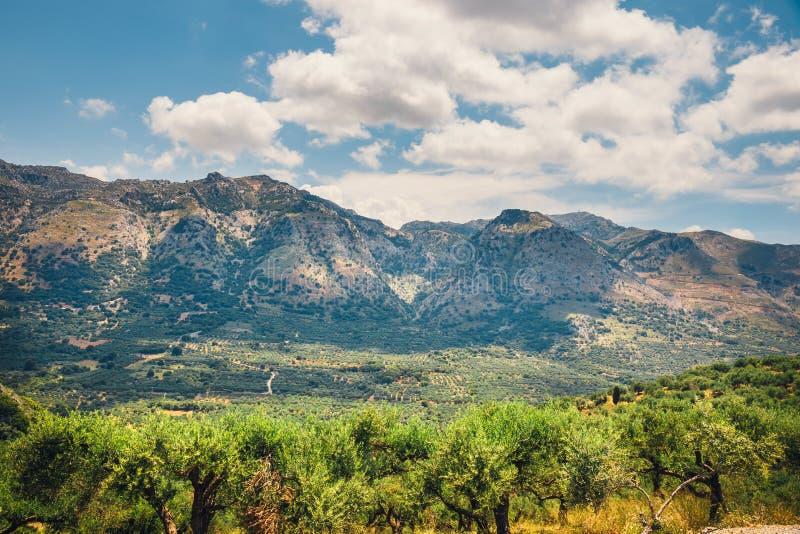 Campi verde oliva sull'isola di Creta in Grecia immagini stock libere da diritti