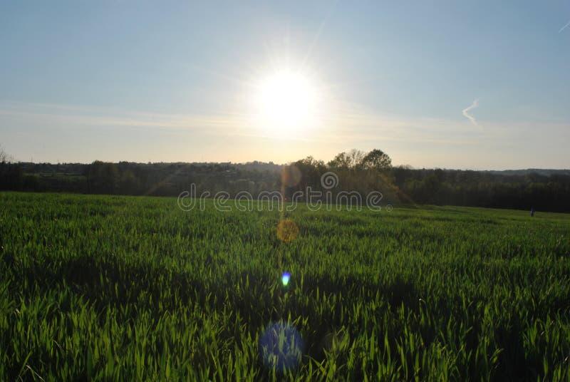 campi verdi immagine stock libera da diritti