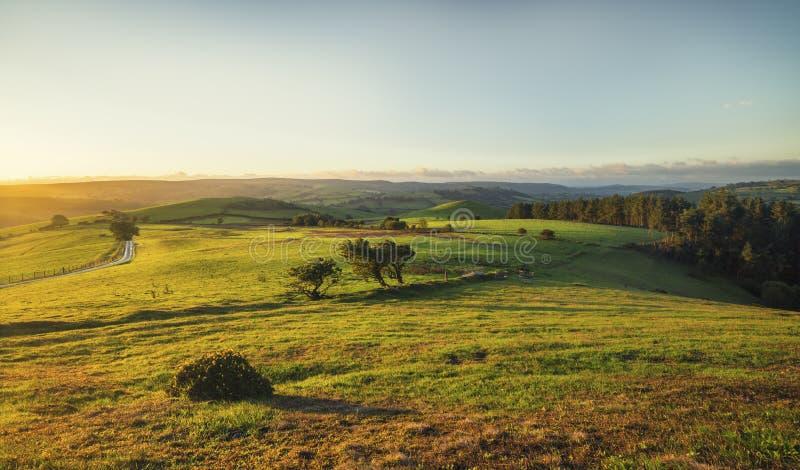 Campi verdi ad alba, Regno Unito della campagna immagine stock