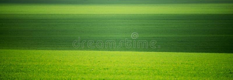 Campi verdi in primavera Minimalismo, campi collinosi verdi moldova fotografie stock