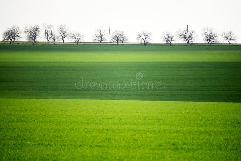Campi verdi in primavera Minimalismo, file degli alberi e campi collinosi verdi moldova fotografia stock libera da diritti
