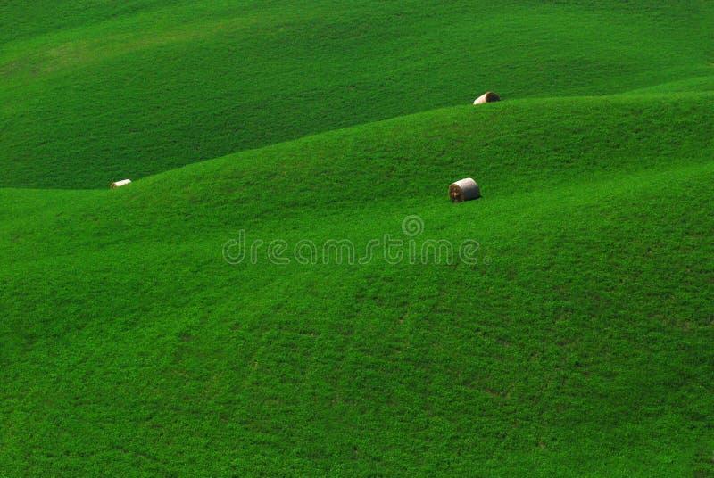 Campi verdi in Toscana fotografia stock libera da diritti