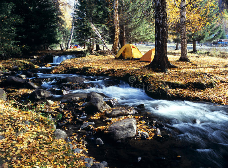 Camping in the autumn forest. Tent in the autumn forest with a stream.in baihaba xinjiang,china,chinese stock image