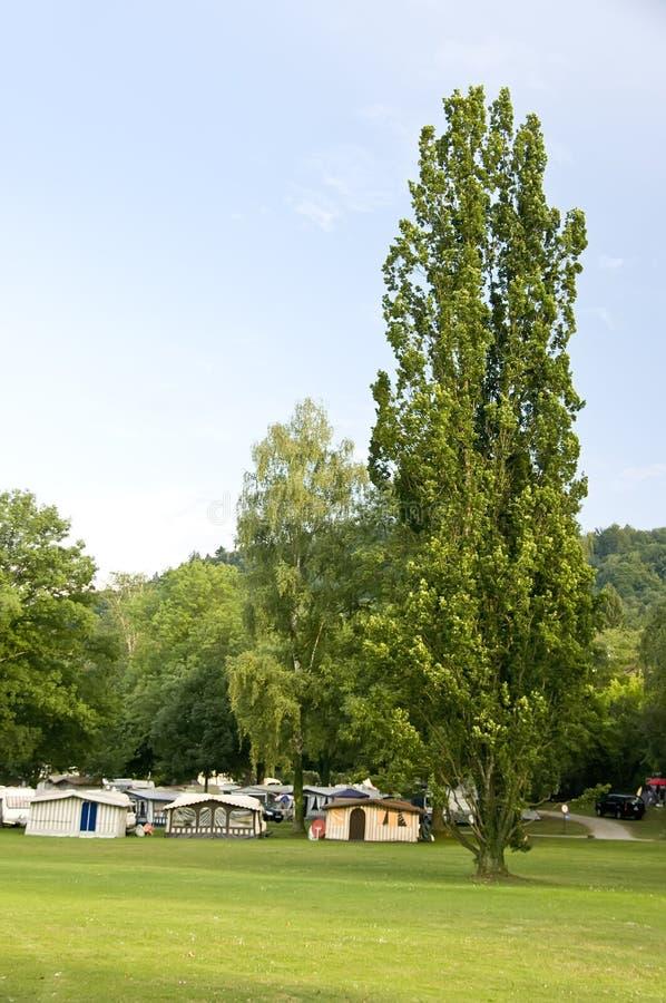 Camping bajo árboles verdes foto de archivo