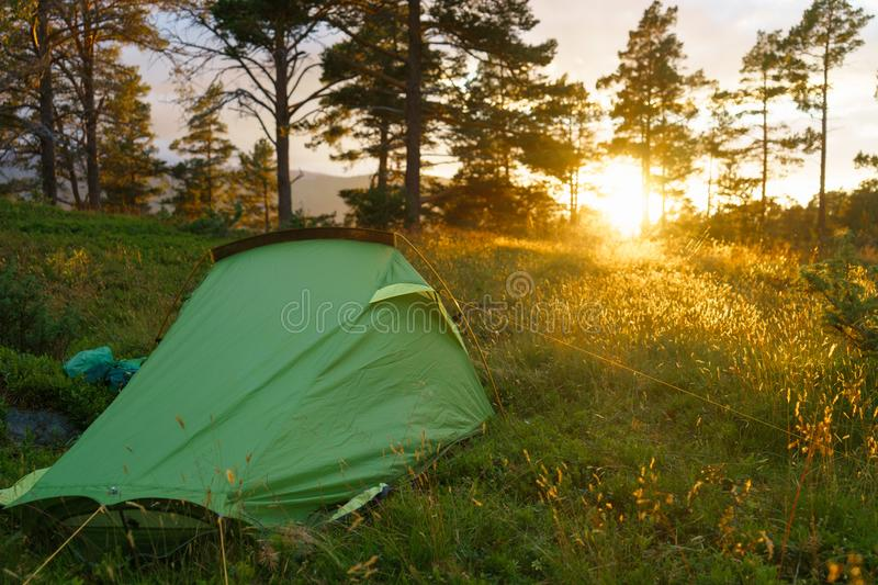 Camping on in the forest during the sunset or sunrise. Bright sunlight. stock images