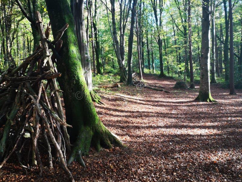 Camping in het bos stock afbeeldingen