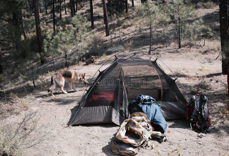 Camping in Idaho stock photo