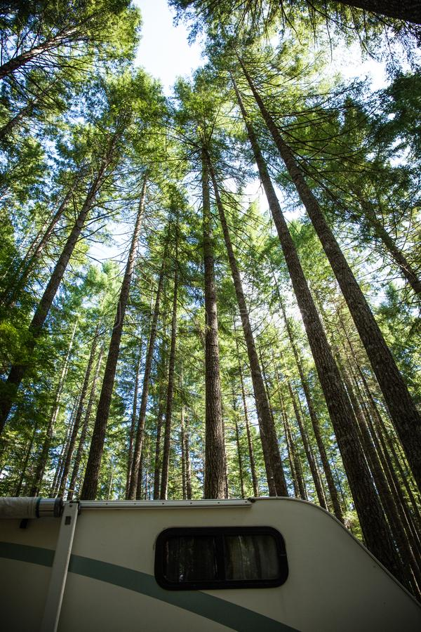 Free Camping In Vancouver Island, British Columbia: Rv Camper Parked Under Impressively Tall Tress, Douglas Firs, In The Camping Royalty Free Stock Images - 163618129