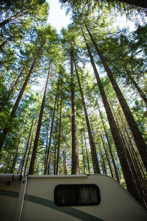 Camping op het eiland Vancouver, British Columbia: rv camper geparkeerd onder een indrukwekkend hoge spanning , douglas firma , i royalty-vrije stock afbeeldingen