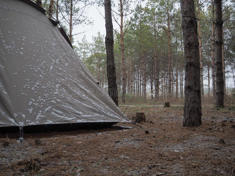 Camping in pine forest. Camping tent slightly covered by snow at early November royalty free stock photography