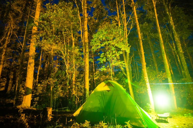 Camping in pine tree forest at night. Colourfull illuminate tent stock photo