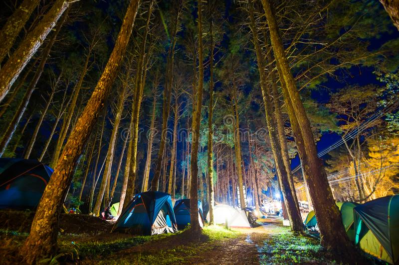 Camping in pine tree forest at night. Colourfull illuminate tent royalty free stock image