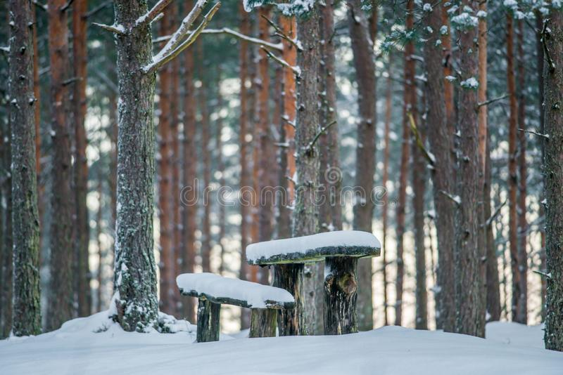 Camping place in forest, winter sunrise royalty free stock images