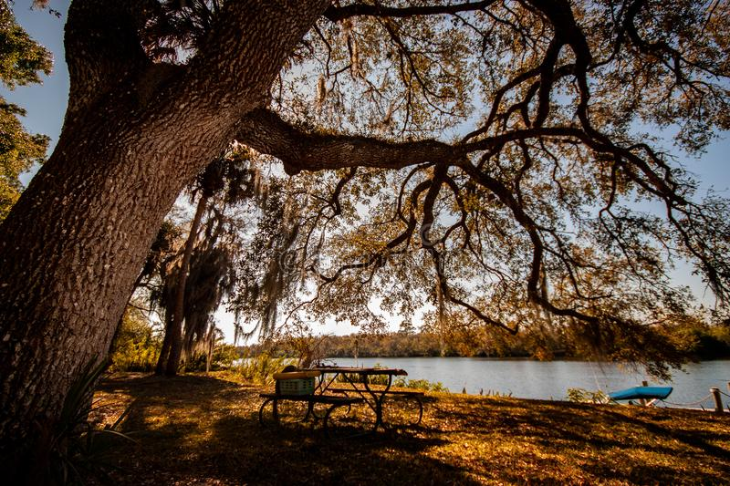 Camping Scenery. In Alva, Florida. Rural small town in South West FL royalty free stock image