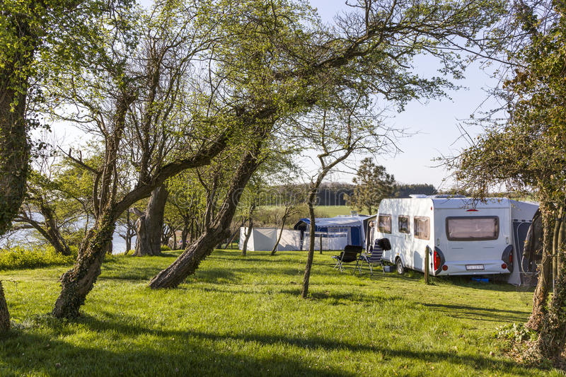 Camping Site. Wit tree grass and pitch stock photo
