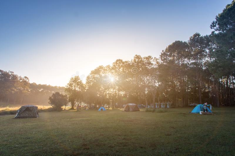 Camping tent on green field near forest during dramatic sunrise at summer misty morning,Concept of outdoor camping adventure stock photos