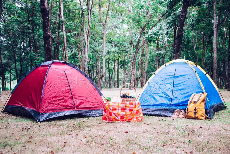 Camping Tent and picnic accessories under tree in morning sunrise. stock photography