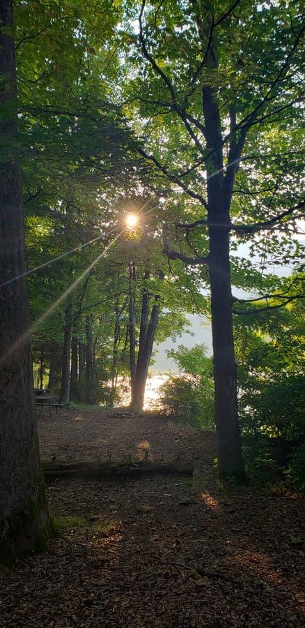 Camping Upstate New York. River, wood, green, trees, rocks, sun royalty free stock photo