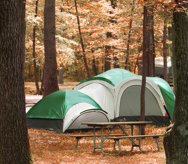 Camping in the woods. Tent located between trees in the woods stock photo
