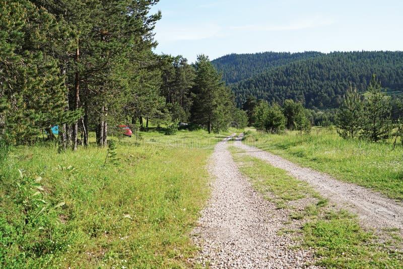 Campingplatz in einem Kiefernwald nahe Weg lizenzfreies stockbild
