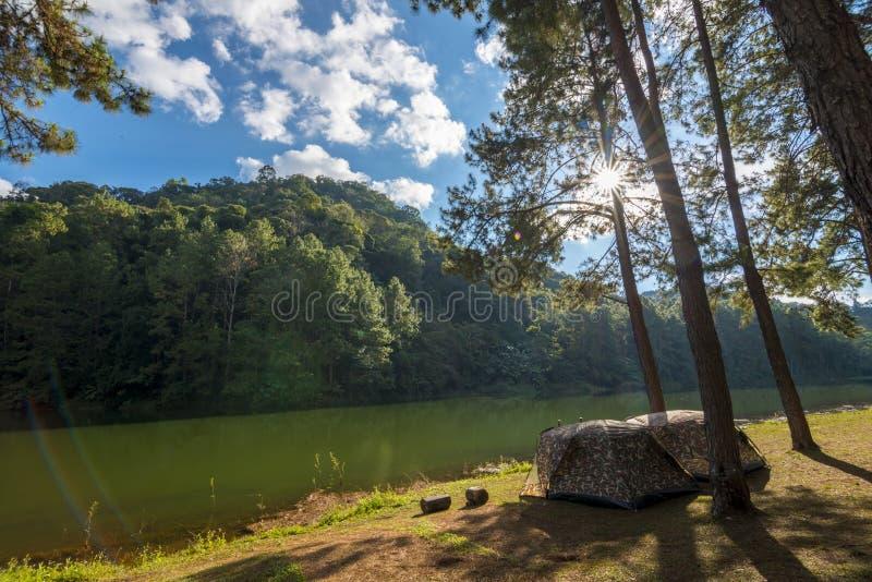 Campingzelt unter dem Kiefernwald nahe See im Sonnenuntergang lizenzfreies stockbild