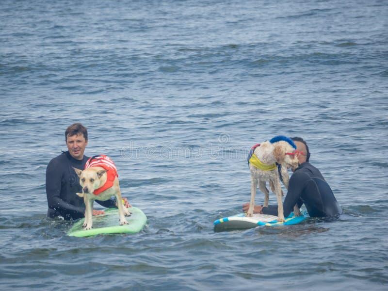 Campionati praticanti il surfing del cane del mondo fotografia stock libera da diritti