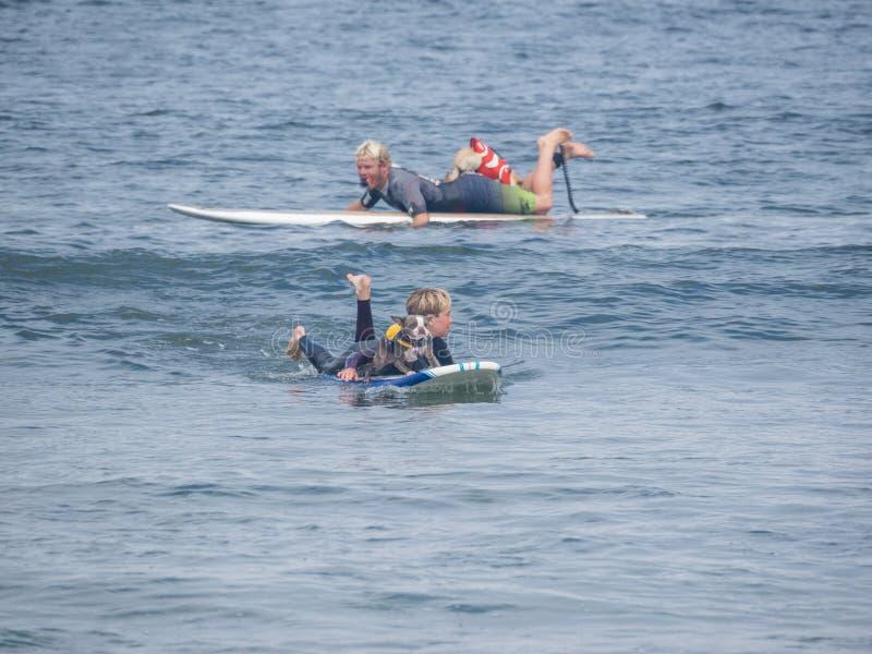 Campionati praticanti il surfing del cane del mondo immagine stock