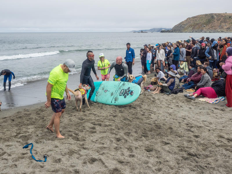 Campionati praticanti il surfing del cane del mondo fotografie stock