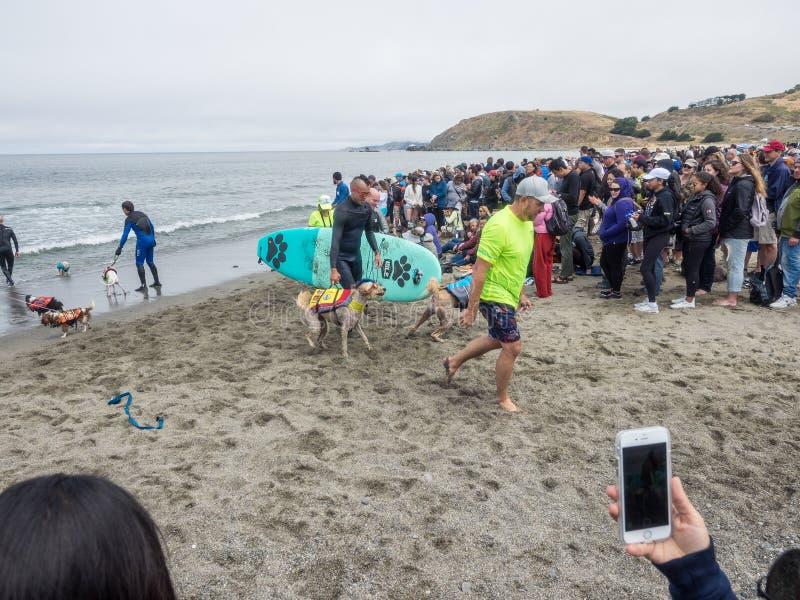 Campionati praticanti il surfing del cane del mondo immagini stock libere da diritti