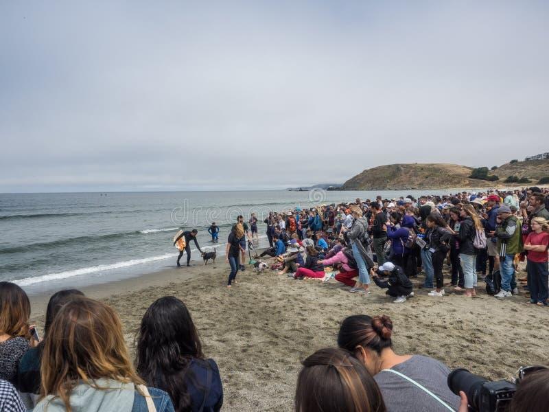 Campionati praticanti il surfing del cane del mondo fotografie stock libere da diritti