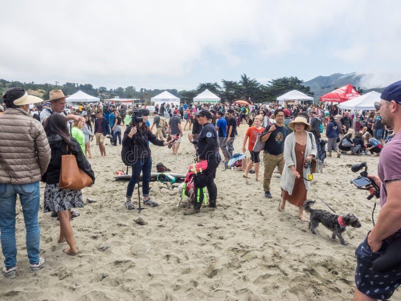 Campionati praticanti il surfing del cane del mondo immagine stock libera da diritti