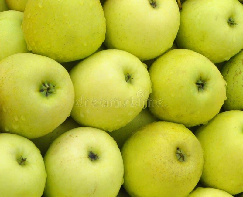 Campione alimentare Mela verde fotografia stock
