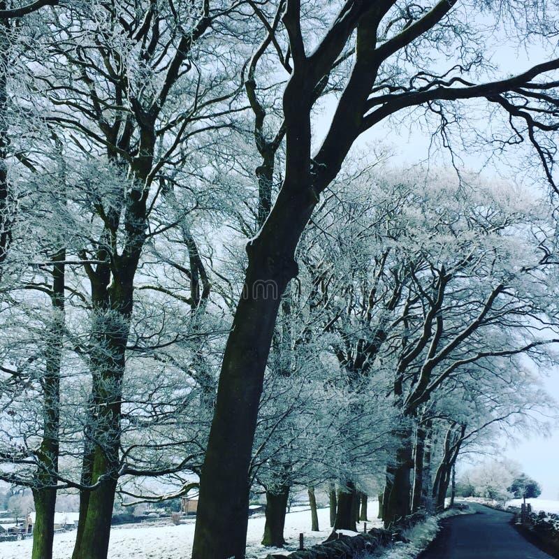 Campo & árvores do inverno cobertos na neve - Tiro com filtro azul fotografia de stock royalty free