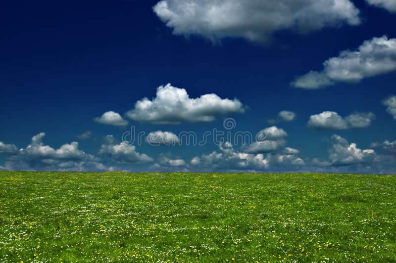 Campo foto de stock royalty free