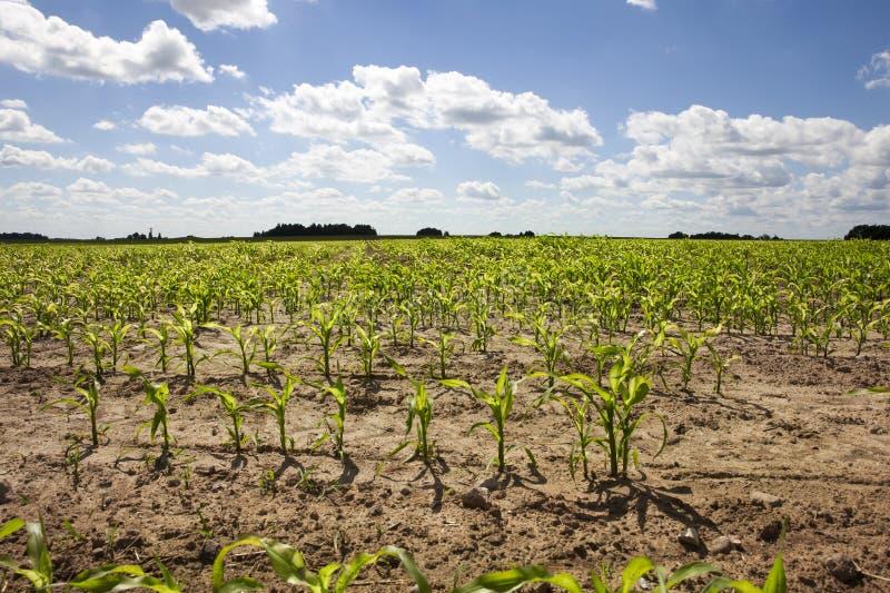 Campo agrícola imagen de archivo