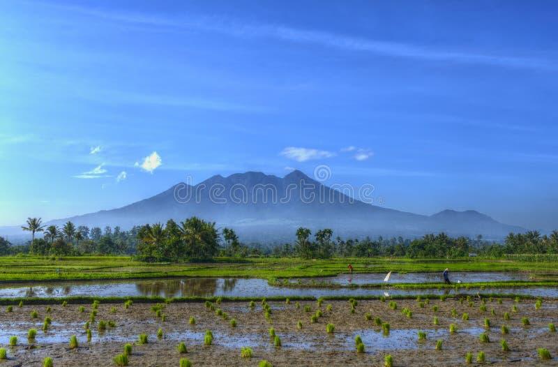 Campo agrícola de la foto hermosa del paisaje con la granja de la semilla del agua y del trabajador con el fondo de la montaña, e foto de archivo libre de regalías