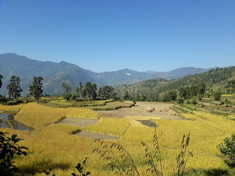 Campo agrícola fértil nos montes de Nepal fotos de stock royalty free