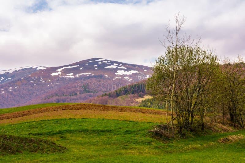 Campo agrícola no montanhês na primavera fotos de stock