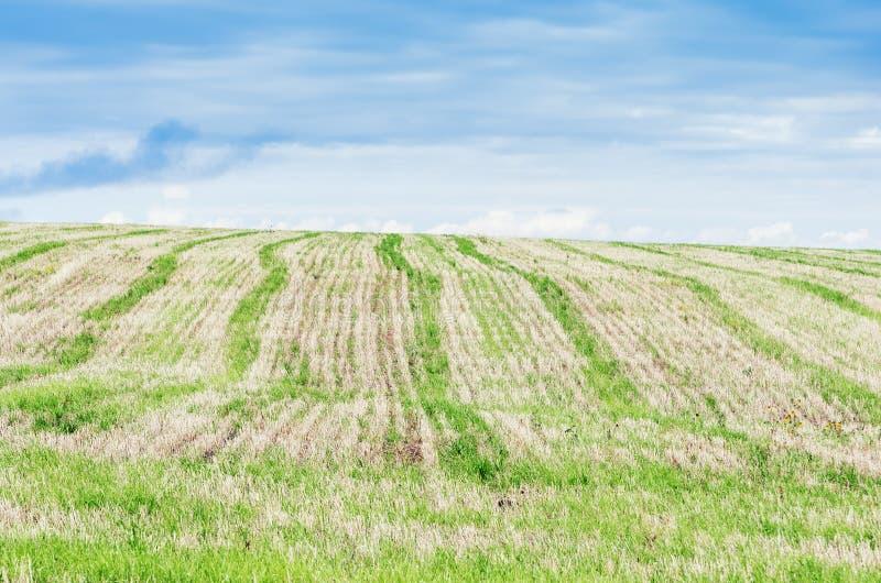 Campo agrícola stubble foto de archivo