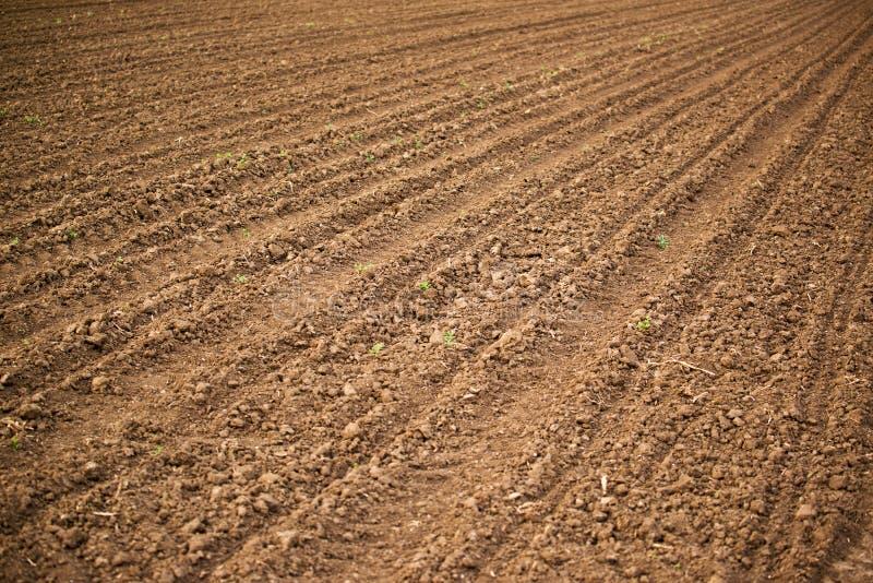 Campo agrícola, suelo de la tierra de labrantío fotografía de archivo libre de regalías