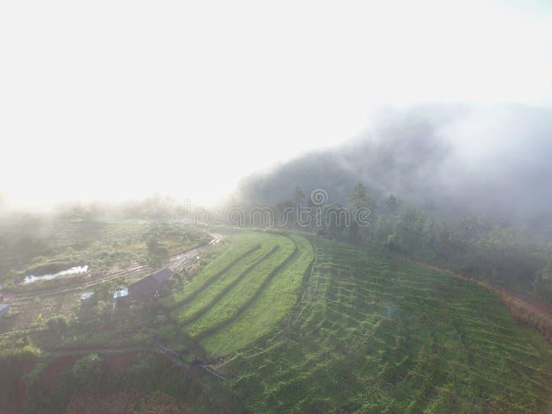Campo agradable del arroz del paso del paisaje en Chiang Mai, Tailandia fotografía de archivo