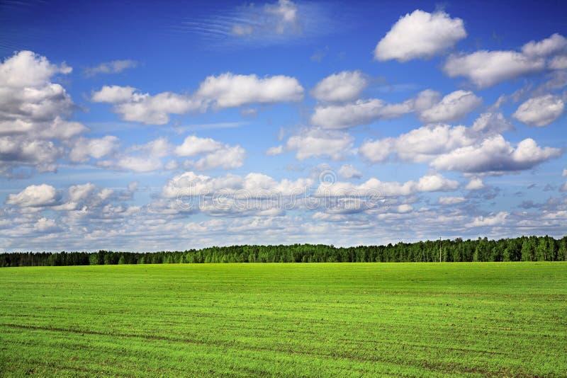 Campo agricolo immagini stock libere da diritti
