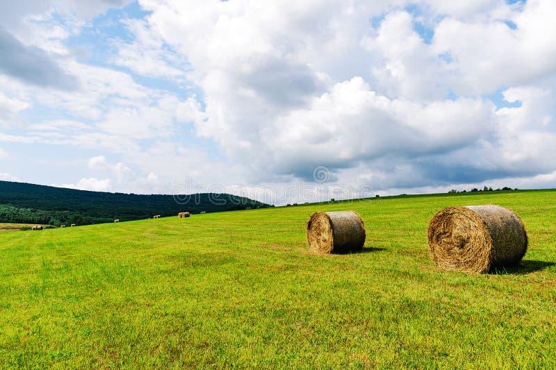 Campo agricolo idilliaco fotografia stock libera da diritti