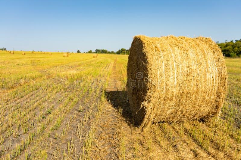 Campo agricultural Pacotes redondos de grama seca no campo contra o céu azul fim do rolo do feno do fazendeiro acima foto de stock