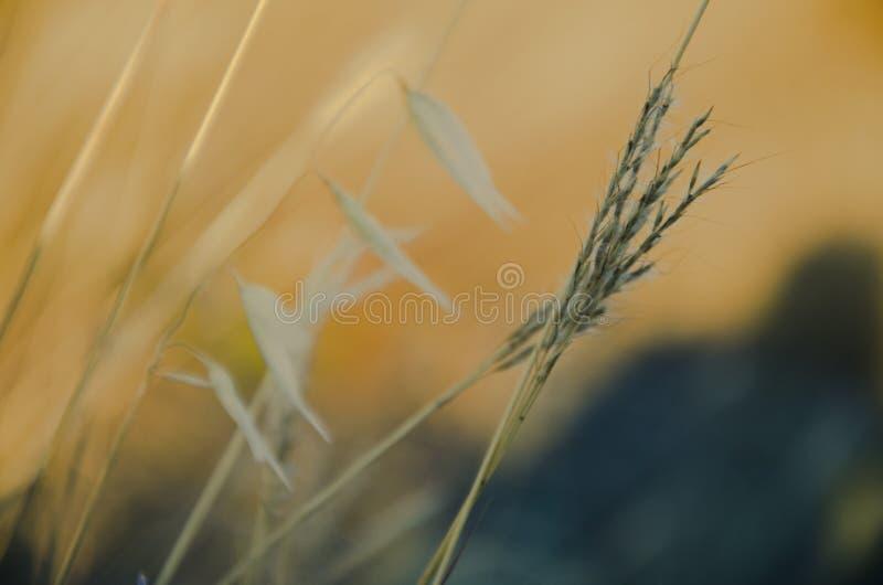 Campo alaranjado do prado fotografia de stock
