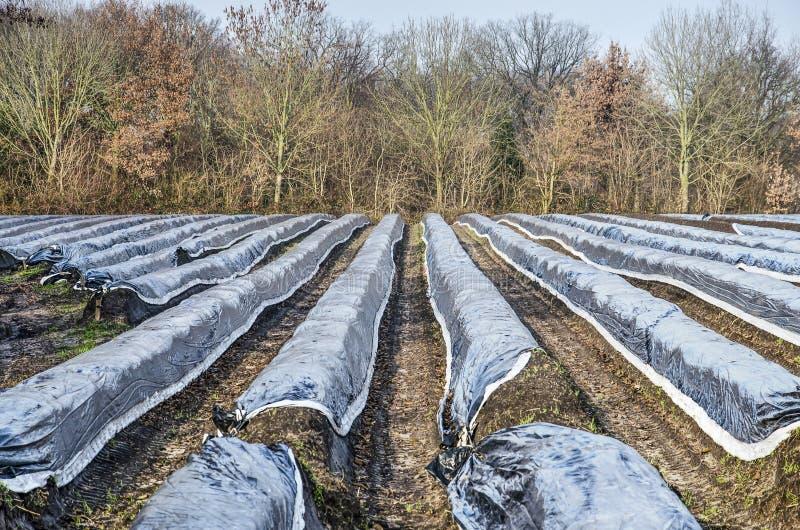 Campo, alberi e cespugli di Aparagus immagine stock libera da diritti