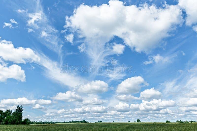 Campo, alberi e cielo blu verdi con le nuvole bianche fotografie stock libere da diritti