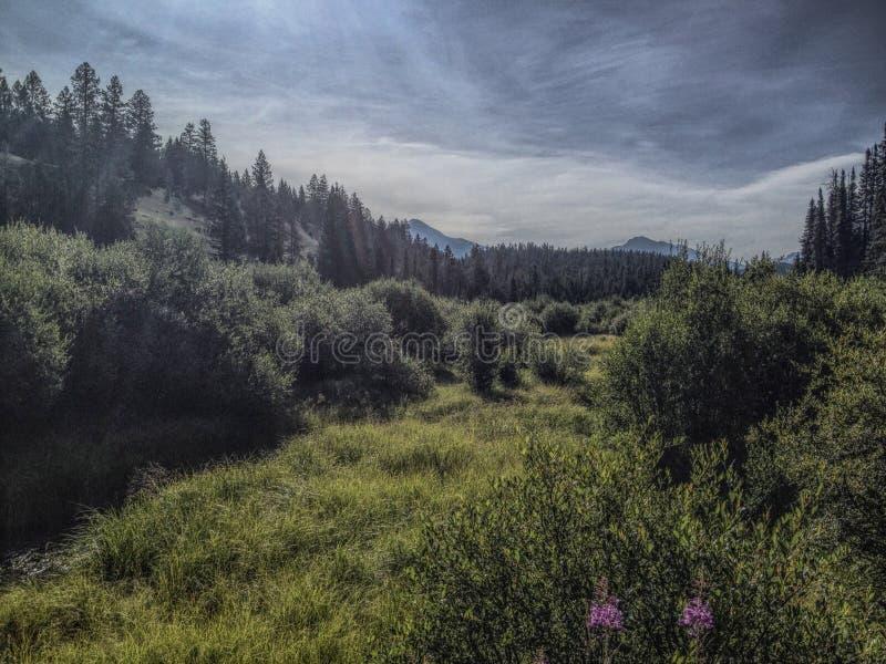 Campo all'interno degli alberi fotografie stock libere da diritti