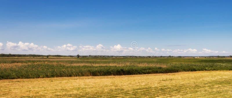 Campo amarelo contra o céu azul imagens de stock