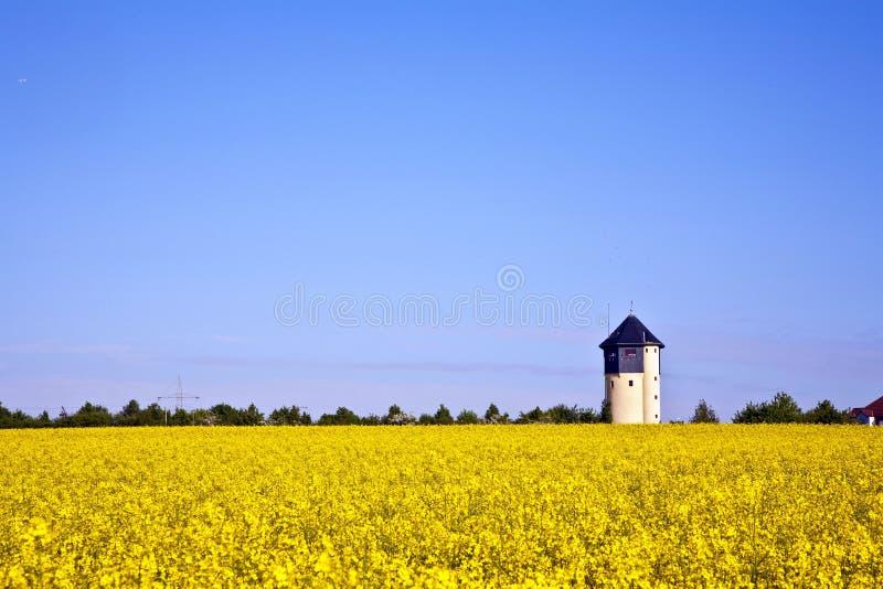 Campo amarillo de la violación en resorte imagenes de archivo